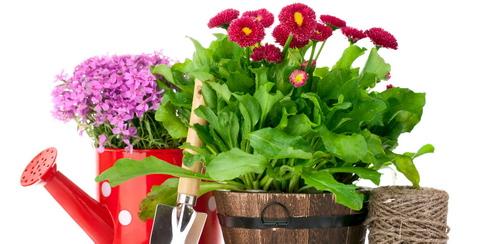 Товары для сада и дома